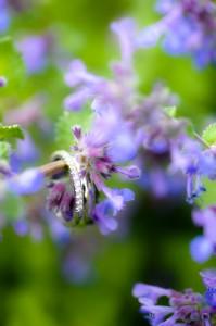 Hochzeits-Fotografie-Murnau-4